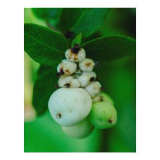 La planta redonda blanca da fruto macro folleto 21,6 x 28 cm