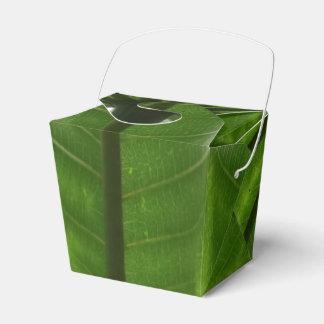 La planta verde saca la caja del favor