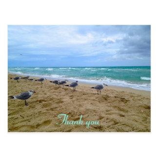 La playa de la gaviota le agradece postal