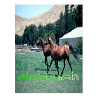 La postal del caballo árabe