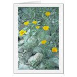 La primavera del desierto florece la tarjeta de