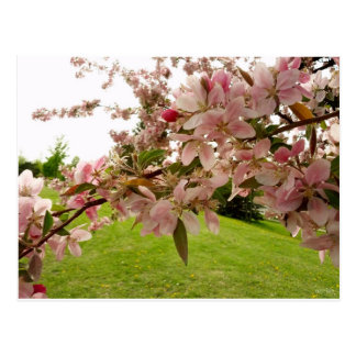 La primavera florece postal