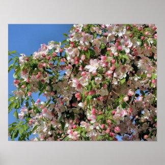 La primavera rosada y blanca florece flor poster