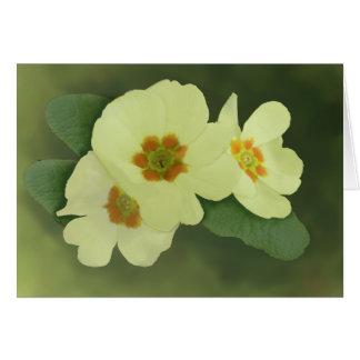 La primavera suave florece la tarjeta de