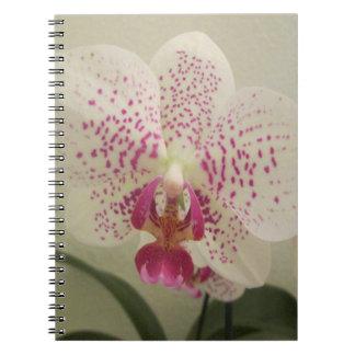 La púrpura de la orquídea salpica cuaderno