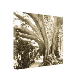 """La sepia beige 16 x 20"""" de la foto de la lona del lona envuelta para galerías"""