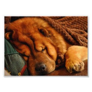 La siesta de un invierno largo….Estilo del perro c Impresiones Fotográficas