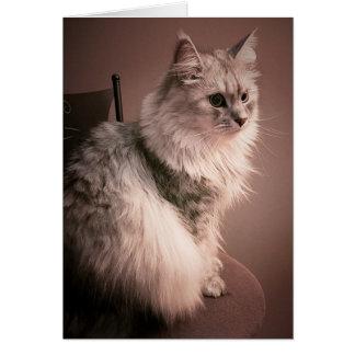 La tarjeta de cumpleaños del maullido del gato