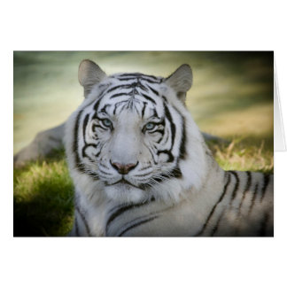 La tarjeta de felicitación blanca del tigre (v2)