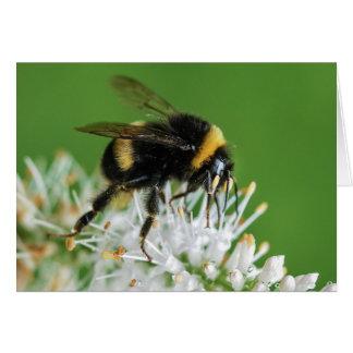 La tarjeta de la abeja del manosear