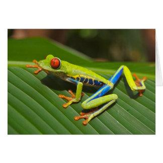 La tarjeta de la rana arbórea