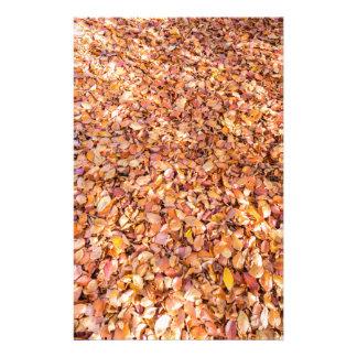 La tierra cubierta con el árbol de haya se va en papelería