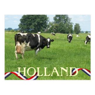 La vaca que le mira Holanda acobarda la postal
