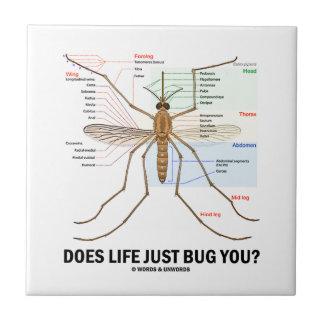 ¿La vida apenas le fastidia? (Anatomía del Azulejo Cuadrado Pequeño
