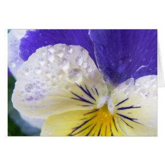 La viola florece la tarjeta de felicitación