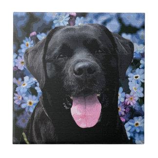 Labrador negro - olvídeme no azulejo