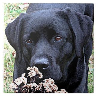 Labrador negro - tarde el tiempo azulejo de cerámica