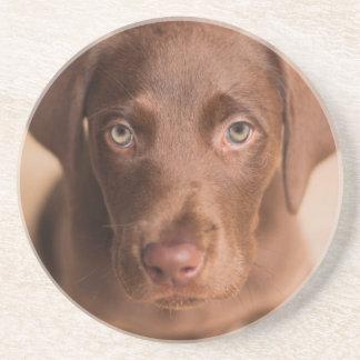 Labrador Posavasos
