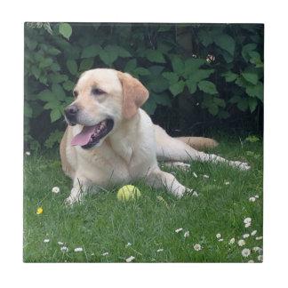 Labrador Retreiver Azulejo Cuadrado Pequeño