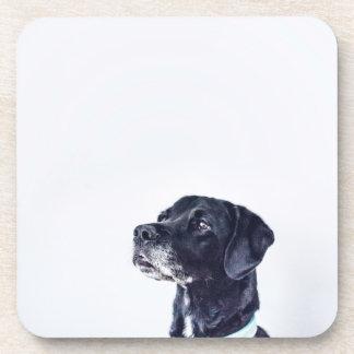 Labrador retriever negro adaptable posavasos