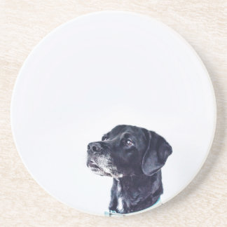Labrador retriever negro adaptable posavasos de arenisca