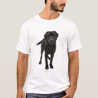 Labrador retriever negro camiseta