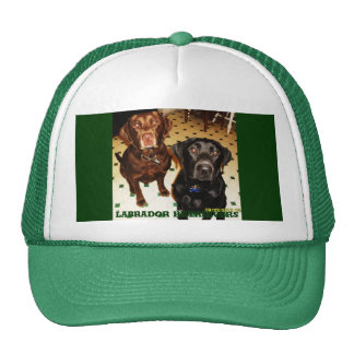 Labradores retrieveres gorros