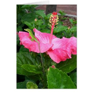 Lagarto de Anole en la fotografía rosada del Tarjeta