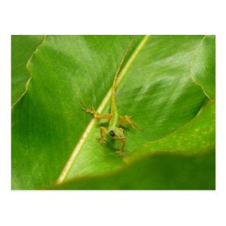 Lagarto verde en la hoja verde postal