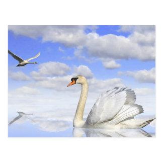 Lago de cisne tarjetas postales