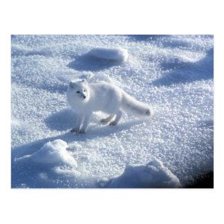 Lagopus del Alopex del zorro ártico) un zorro Postal