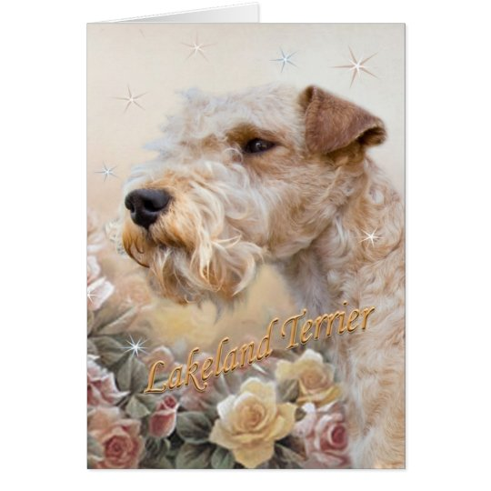 Lakeland Terrier entre tarjeta de los rosas