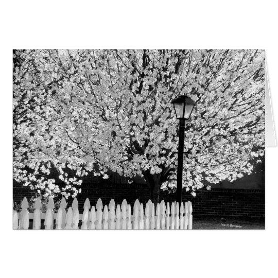 Lamppost en primavera tarjeta de felicitación