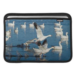 Lanzamiento de los gansos de nieve (Chen Funda Para Macbook Air