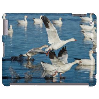 Lanzamiento de los gansos de nieve (Chen Funda Para iPad