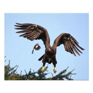 Lanzamiento juvenil de Eagle calvo Foto