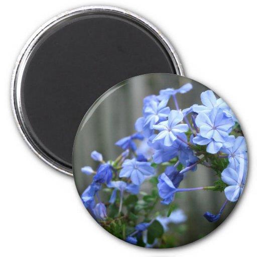 las flores azules del grafito se cierran para arri imán