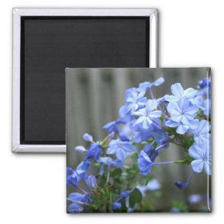 las flores azules del grafito se cierran para arri