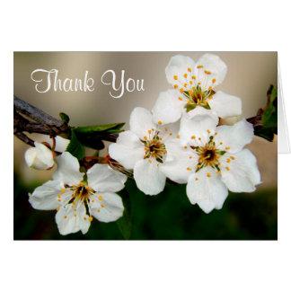 Las flores blancas de la flor de cerezo le tarjeta