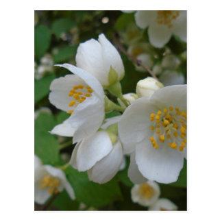las flores blancas del verano dan evocador del p postal