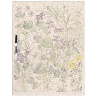 Las flores botánicas de las violas secan al pizarra blanca