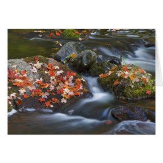 Las hojas de arce rojas alfombran las rocas en tarjeta