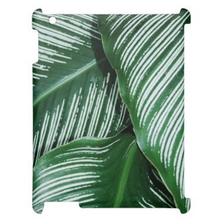 Las hojas del verde con blanco rayan el primer