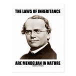 Las leyes de la herencia son mendelianas en natura tarjeta postal