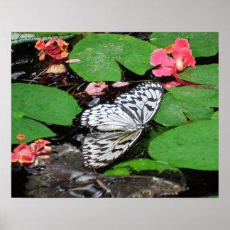 Las mariposas no pueden nadar arte fotográfico