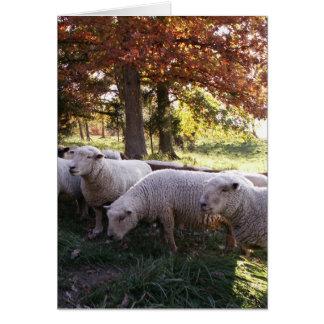 Las ovejas tarjeta de felicitación