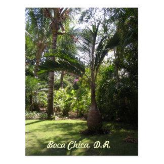 Las palmas de Boca Chica Postal