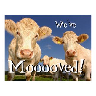 Las vacas divertidas hemos movido la nueva postal