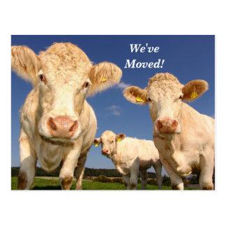 Las vacas hemos movido la nueva postal de la