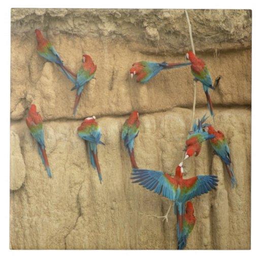 Lavabo de Perú, el río Amazonas, Madre de Dios Azulejo Cerámica